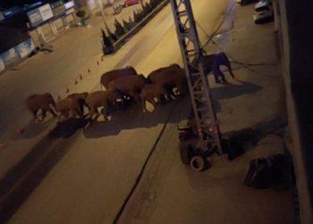 Elefantes em Eshan, Yunan, China  27/5/2021 Eshan County Fang Yuan Car Care Center/ via REUTERS